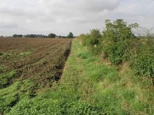 Field and Cumberworth