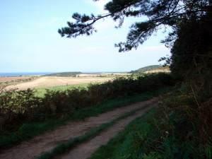 Forestry Trail on Weybourne Heath