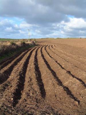 Ploughed field at St Levan