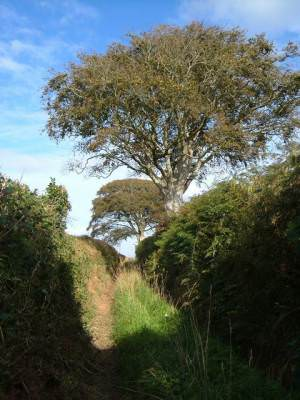 Field track in South Hams