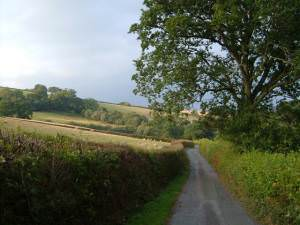 Lane in the Ted valley