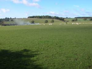 Sheep grazing near Kinetonhill Farm