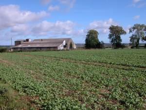 Farm buildings near Aylworth