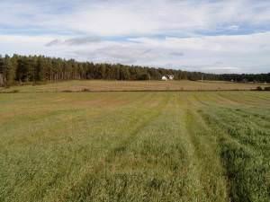 View from near Drumdivan towards Delnies Woods