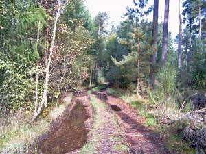 Forestry road in Moss-side Woods