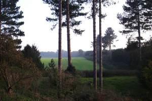 Supposed UFO landing site - Rendlesham Forest