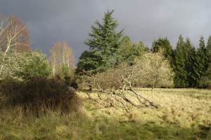 The remains of the old orchard at Tangham