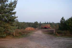 Harvesting operations - Rendlesham Forest SSSI