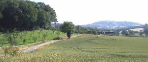 Gold Hill Farm