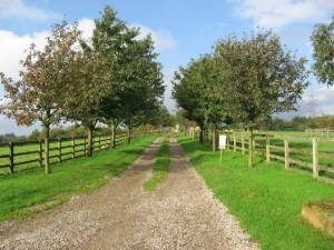 The Western Driveway Of Providence Hill Farm