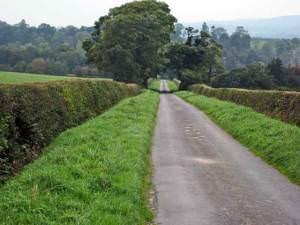 Country road at Ladyburn, Kilkerran