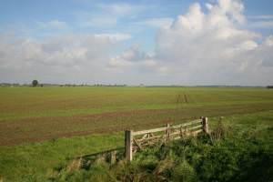 Croft Marsh