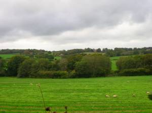 Weald near Lions Green