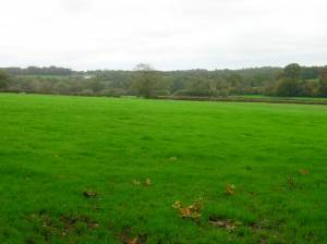Weald near Horam