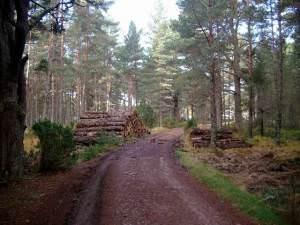 Timber operations approaching Badaguish