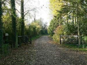 The Driveway To Gadwal Farm