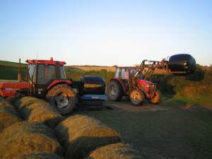 Silage making in Salcombe