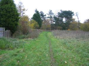 Path above Castle Eden Dene
