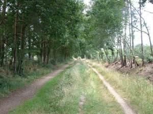Castleman Trailway near Lions Hill