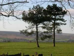 Trees on Egton Flats