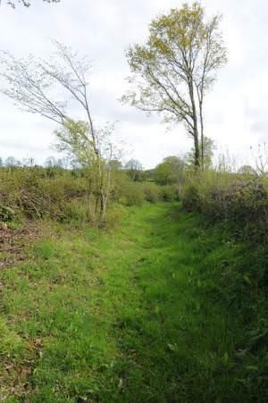 Bridleway near Brilley