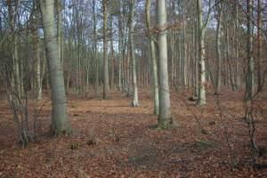 Big Wood, West Harling Heath