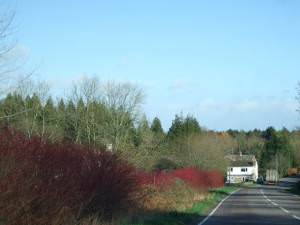 A 352 showing first house in Lyons Gate with dogwood on roadside