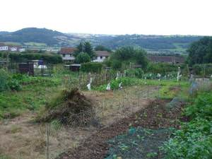 Allotments off Barnards Hill Lane