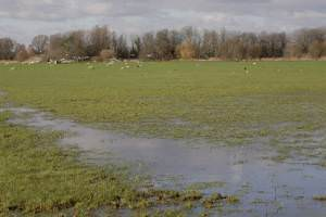 Water Meadows from footpath to Black Bridge, Hemingford Abbots, Cambridgeshire