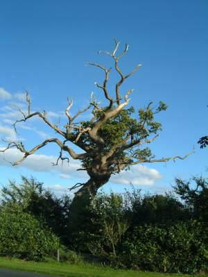 The Old Tree, Beaconsfield Farm, Hadnall, Nr Shrewsbury