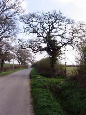 View towards Atrim