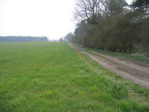 Arable land and woods south of Coxford