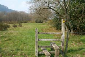 Stile and path on river bank
