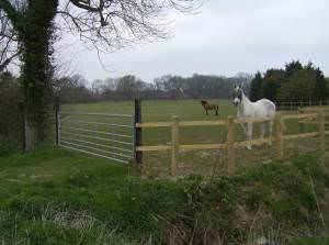 Paddocks at Wood Farm