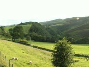 Rheidol valley, nr. Ponterwyd
