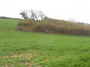 Pasture with gorse thicket