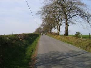 Lon Wledig ger Blaenpennal / Country Lane near Blaenpennal