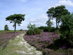 Path on Mount Hill, Red Shoot Plain, New Forest