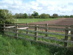 New Hedging on the footpath to Weeton