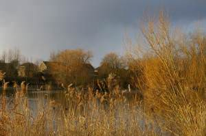 Somersham Lakes with housing estate in background