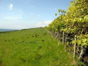 Field and hedge at Auchenhew