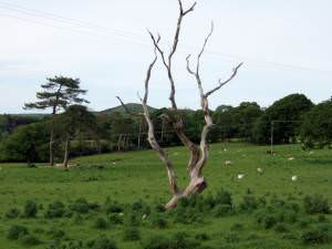 Dead tree and gibbet hill