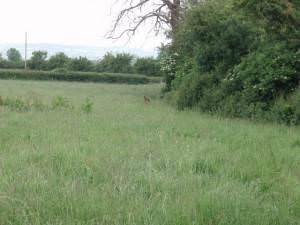 Overgrown footpath near Wick