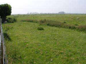 Sheep graze on Romney Marsh
