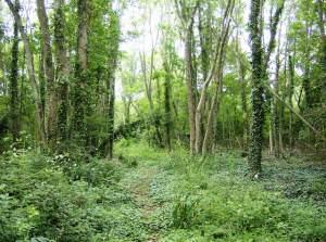 Bridleway in Whitefield Wood