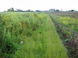 Footpath to Hill Farm