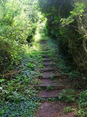 Steps, Homelands Pit Farm