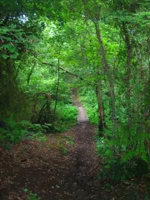 Footbridge, America Wood