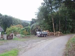Cotton Wood, near Grogley