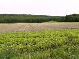 Field and Scally Moor Plantation